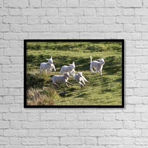 "Printscapes Wall Art: 18"" x 12"" Canvas Print With Black Frame - Sheep Running by John Short"