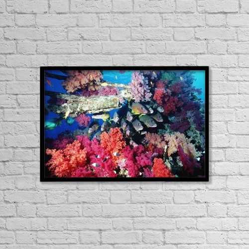 "Printscapes Wall Art: 18"" x 12"" Canvas Print With Black Frame - Fish And Colourful Corals by Alex Misiewicz"