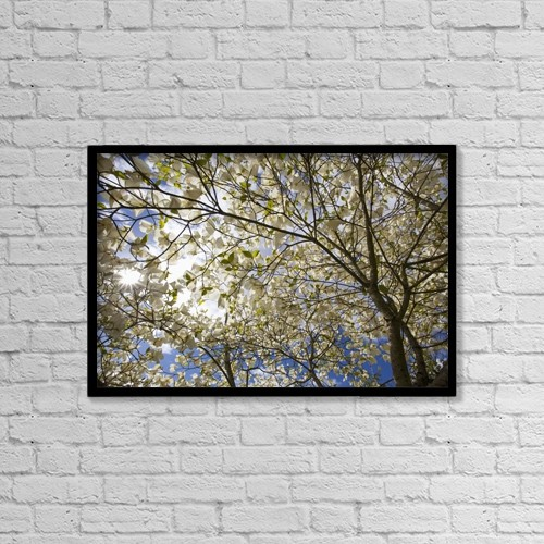 "Printscapes Wall Art: 18"" x 12"" Canvas Print With Black Frame - A Tree With Blossoms In Happy Valley Park by Craig Tuttle"