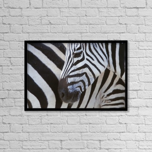 """Printscapes Wall Art: 18"""" x 12"""" Canvas Print With Black Frame - Zebras Face And Mid Body, Close Up by Ian Cumming"""