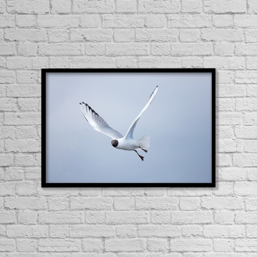 """Printscapes Wall Art: 18"""" x 12"""" Canvas Print With Black Frame - A Bird In Flight by John Short"""