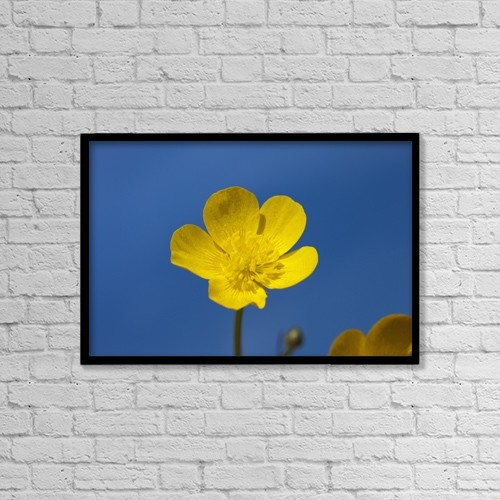 "Printscapes Wall Art: 18"" x 12"" Canvas Print With Black Frame - A Yellow Buttercup Against A Blue Sky by John Short"