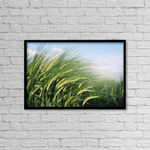 "Printscapes Wall Art: 18"" x 12"" Canvas Print With Black Frame - Wheat Fields In England. Close-Up by Chris Martin"