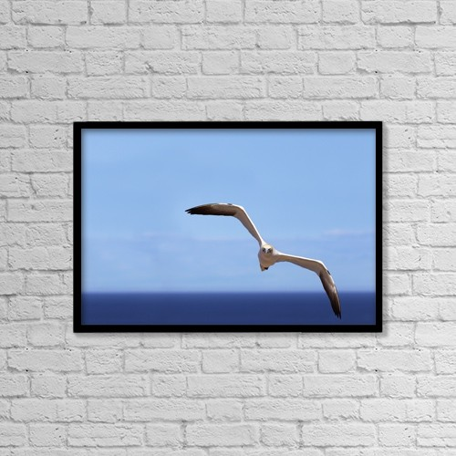 """Printscapes Wall Art: 18"""" x 12"""" Canvas Print With Black Frame - Gannet Flying Over The Water by Richard Wear"""