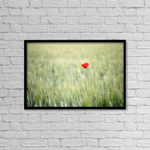 "Printscapes Wall Art: 18"" x 12"" Canvas Print With Black Frame - Red Poppy In Wheat Field by Ian Cumming"