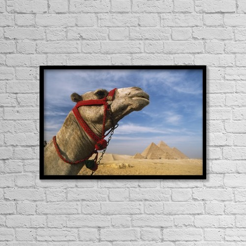 """Printscapes Wall Art: 18"""" x 12"""" Canvas Print With Black Frame - Camel In Front Of Great Pyramids Of Giza by Ian Cumming"""