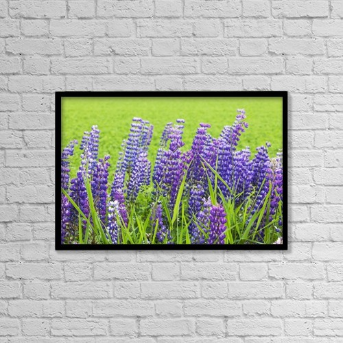 """Printscapes Wall Art: 18"""" x 12"""" Canvas Print With Black Frame - Purple Lupines by Susan Dykstra"""
