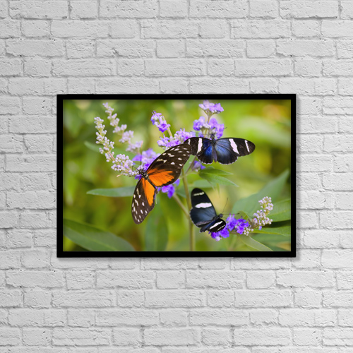 "Printscapes Wall Art: 18"" x 12"" Canvas Print With Black Frame - Animals by Craig Tuttle"