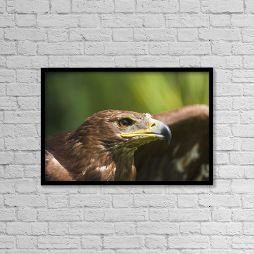 "Printscapes Wall Art: 18"" x 12"" Canvas Print With Black Frame - The Head Of An Eagle by John Short"