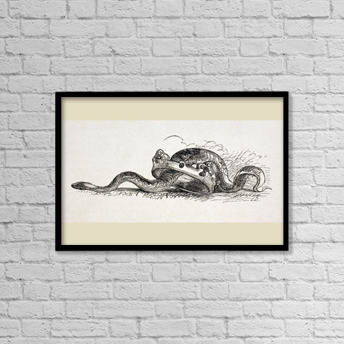 "Printscapes Wall Art: 18"" x 12"" Canvas Print With Black Frame - A Snake Slithers Through A Royal Crown by Ken Welsh"