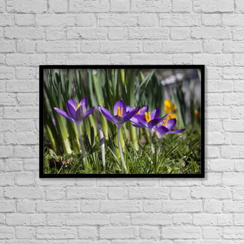"Printscapes Wall Art: 18"" x 12"" Canvas Print With Black Frame - Close-Up Colorful Purple Flowers by John Short"