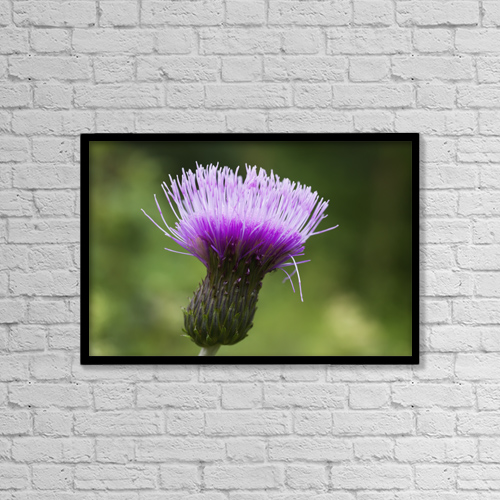 "Printscapes Wall Art: 18"" x 12"" Canvas Print With Black Frame - A Purple Flower; Northumberland, England by John Short"