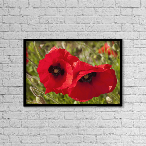"""Printscapes Wall Art: 18"""" x 12"""" Canvas Print With Black Frame - Red Poppies; Northumberland, England by John Short"""