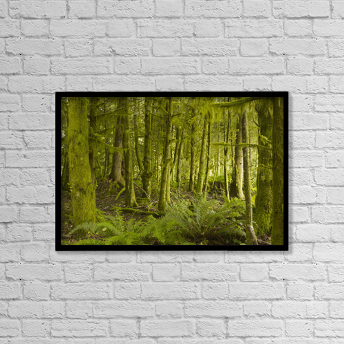"Printscapes Wall Art: 18"" x 12"" Canvas Print With Black Frame - A Lush Forest; Tofino, British Columbia, Canada by Ian Grant"