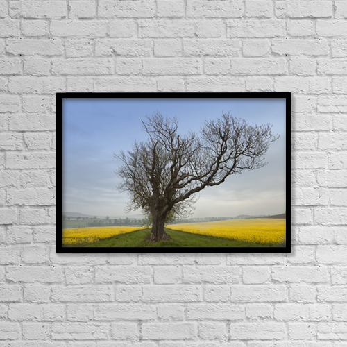 "Printscapes Wall Art: 18"" x 12"" Canvas Print With Black Frame - A Lone Tree On The Edge Of A Yellow Field by John Short"