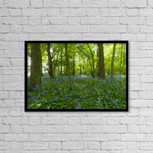 "Printscapes Wall Art: 18"" x 12"" Canvas Print With Black Frame - A Forest With Bluebells by John Short"