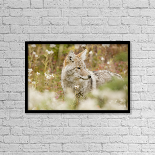 "Printscapes Wall Art: 18"" x 12"" Canvas Print With Black Frame - Young Coyote (Canis Latrans) In A Forest by Philippe Widling"