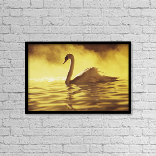"Printscapes Wall Art: 18"" x 12"" Canvas Print With Black Frame - View of single white African Swan in water by Brent Black"