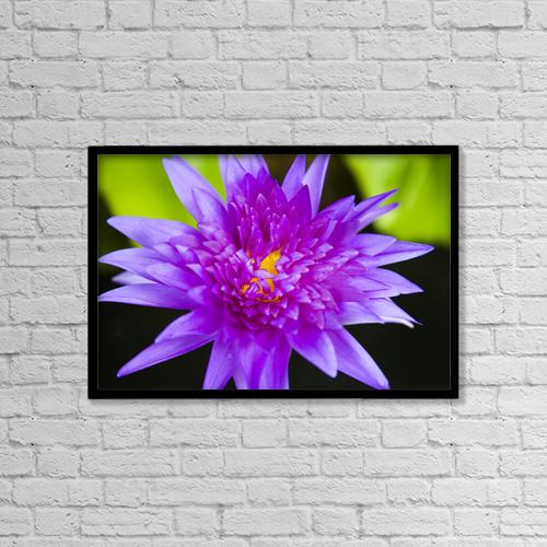 "Printscapes Wall Art: 18"" x 12"" Canvas Print With Black Frame - Hawaii, Purple Lotus Blossum by Dana Edmunds"