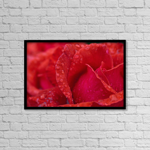 "Printscapes Wall Art: 18"" x 12"" Canvas Print With Black Frame - Red Rose Petals With Dew Drops by John Short"