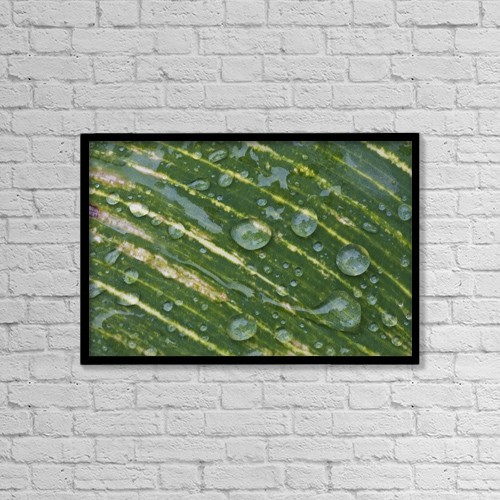 "Printscapes Wall Art: 18"" x 12"" Canvas Print With Black Frame - Water Drops On A Plant Leaf by John Short"
