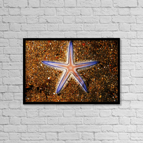 """Printscapes Wall Art: 18"""" x 12"""" Canvas Print With Black Frame - Close-up Of Sea star On Colorful Sand by Ed Robinson"""