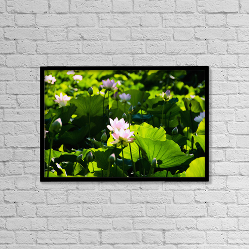 "Printscapes Wall Art: 18"" x 12"" Canvas Print With Black Frame - Pink Lotus Flowers Growing Among Leaves by Ray Laskowitz"