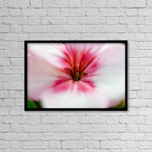 "Printscapes Wall Art: 18"" x 12"" Canvas Print With Black Frame - Close-Up Of Bright Pink Flower by Ray Laskowitz"