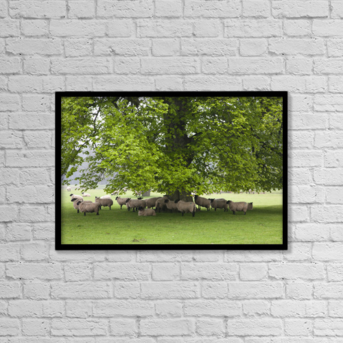 "Printscapes Wall Art: 18"" x 12"" Canvas Print With Black Frame - Sheep Standing Under A Tree by John Short"