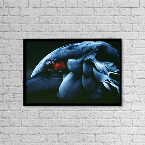 "Printscapes Wall Art: 18"" x 12"" Canvas Print With Black Frame - Animals by Carl Shaneff"