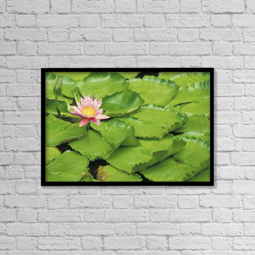 "Printscapes Wall Art: 18"" x 12"" Canvas Print With Black Frame - Water Lily (Purple) And Lily Pads by David Cornwell"