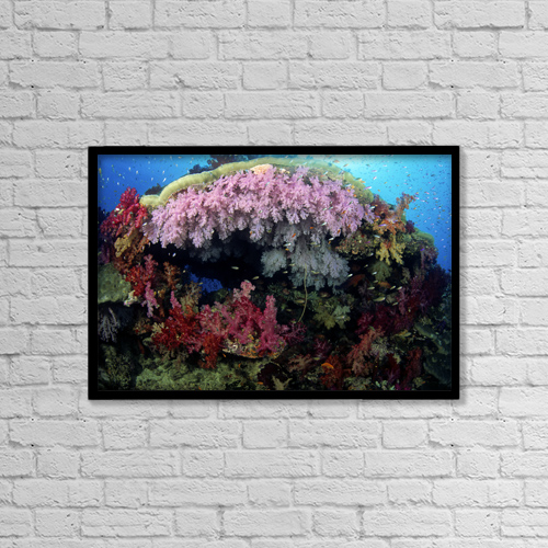 "Printscapes Wall Art: 18"" x 12"" Canvas Print With Black Frame - Fiji, Alcyonarian coral ; Wakaya Island by Dave Fleetham"