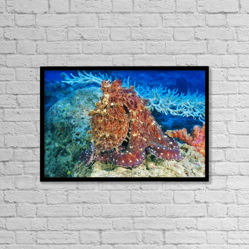 "Printscapes Wall Art: 18"" x 12"" Canvas Print With Black Frame - Day Octopus (Octopus Cyanea) on coral; Fiji by Dave Fleetham"