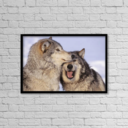 "Printscapes Wall Art: 18"" x 12"" Canvas Print With Black Frame - Alaska, Two Gray Wolves At The Forests Edge by John Hyde"
