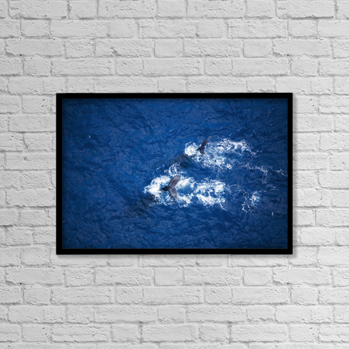 "Printscapes Wall Art: 18"" x 12"" Canvas Print With Black Frame - Hawaii, Maui, Humpback Whales, Aerial View by Ron Dahlquist"