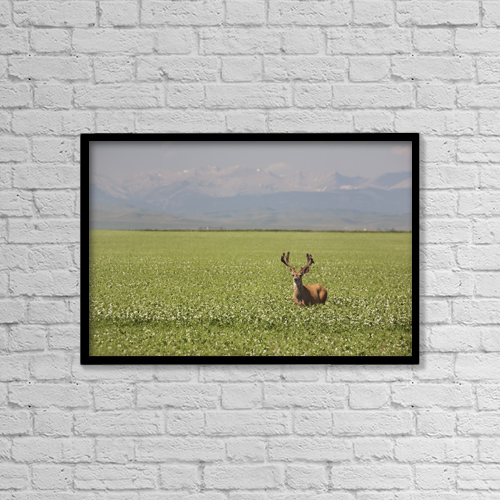 """Printscapes Wall Art: 18"""" x 12"""" Canvas Print With Black Frame - Animals by Michael Interisano"""
