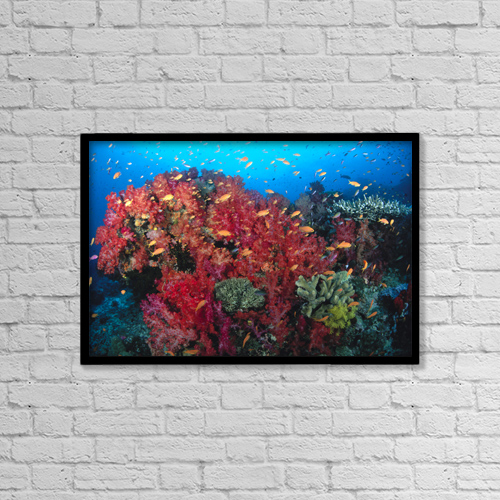 """Printscapes Wall Art: 18"""" x 12"""" Canvas Print With Black Frame - Nature by Dave Fleetham"""