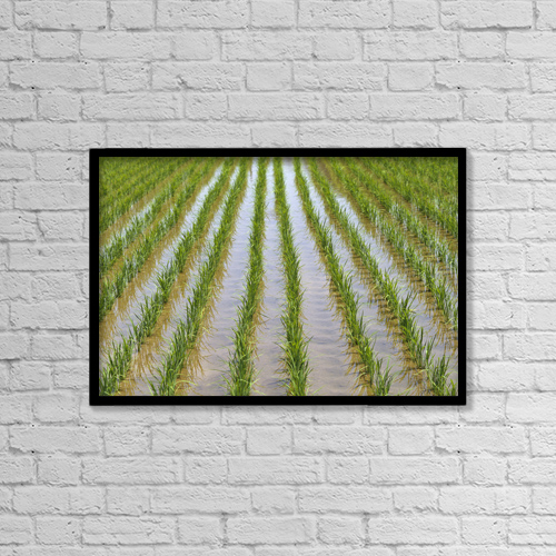 "Printscapes Wall Art: 18"" x 12"" Canvas Print With Black Frame - Agriculture by Rita Ariyoshi"