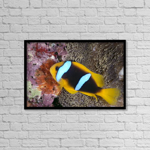 "Printscapes Wall Art: 18"" x 12"" Canvas Print With Black Frame - Animals by Ed Robinson"