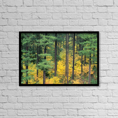 "Printscapes Wall Art: 18"" x 12"" Canvas Print With Black Frame - Nature by Greg Vaughn"