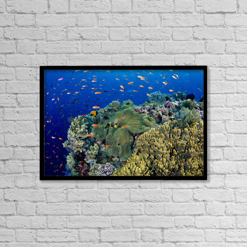 "Printscapes Wall Art: 18"" x 12"" Canvas Print With Black Frame - Animals by Dave Fleetham"