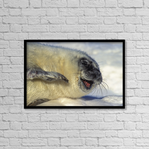 """Printscapes Wall Art: 18"""" x 12"""" Canvas Print With Black Frame - Animals by Thomas Kitchin & Victoria Hurst"""