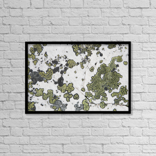 "Printscapes Wall Art: 18"" x 12"" Canvas Print With Black Frame - Detail Of Lichen On A White Rock by Michael Interisano"