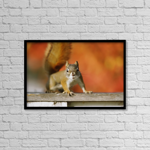 "Printscapes Wall Art: 18"" x 12"" Canvas Print With Black Frame - Red Squirrel (Tamiasciurus Hudsonicus) by Mike Grandmaison"