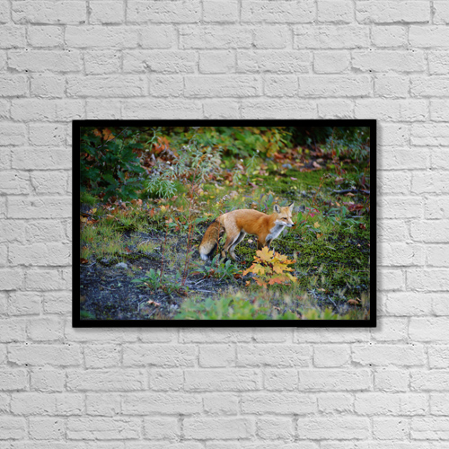 "Printscapes Wall Art: 18"" x 12"" Canvas Print With Black Frame - Animals by Mike Grandmaison"