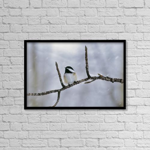 "Printscapes Wall Art: 18"" x 12"" Canvas Print With Black Frame - Black-Capped Chickadee, Alberta by Darwin Wiggett"