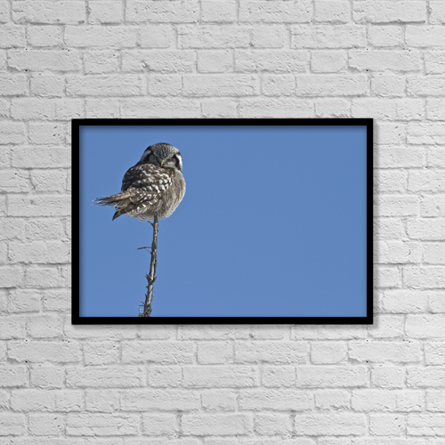 "Printscapes Wall Art: 18"" x 12"" Canvas Print With Black Frame - Northern Boreal Owl by Robert Postma"