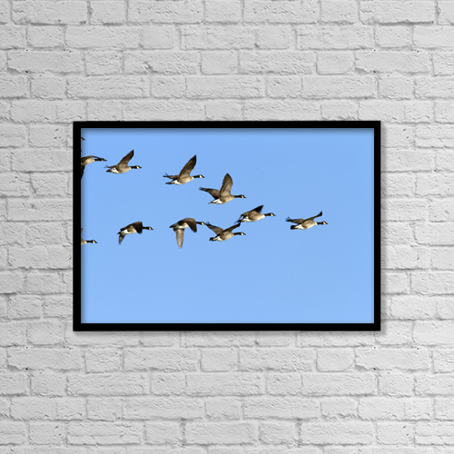 "Printscapes Wall Art: 18"" x 12"" Canvas Print With Black Frame - Group Of Canada Geese In Flight by Philippe Henry"