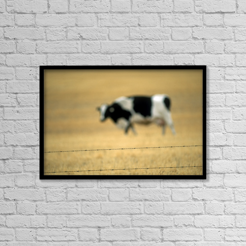 """Printscapes Wall Art: 18"""" x 12"""" Canvas Print With Black Frame - Grazing Cow, Alberta, Canada by Ron Watts"""