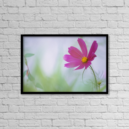 "Printscapes Wall Art: 18"" x 12"" Canvas Print With Black Frame - Flower In Garden, Alberta, Canada by Darwin Wiggett"